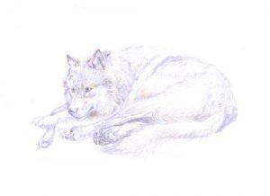 fine wolf