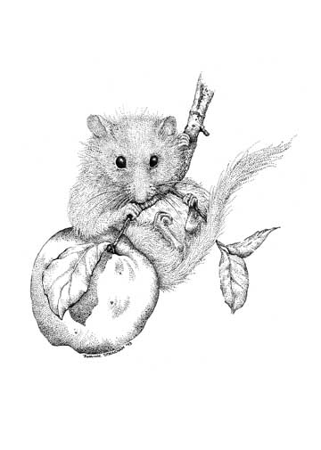 Dormouse Card