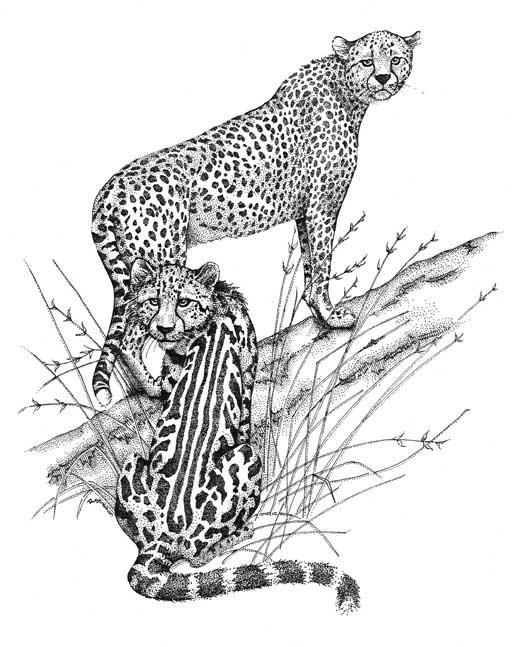 Cheetahs Card